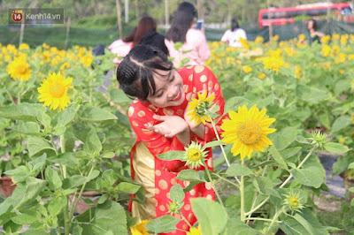 Hoa hướng dương đẹp nhất thế giới 21