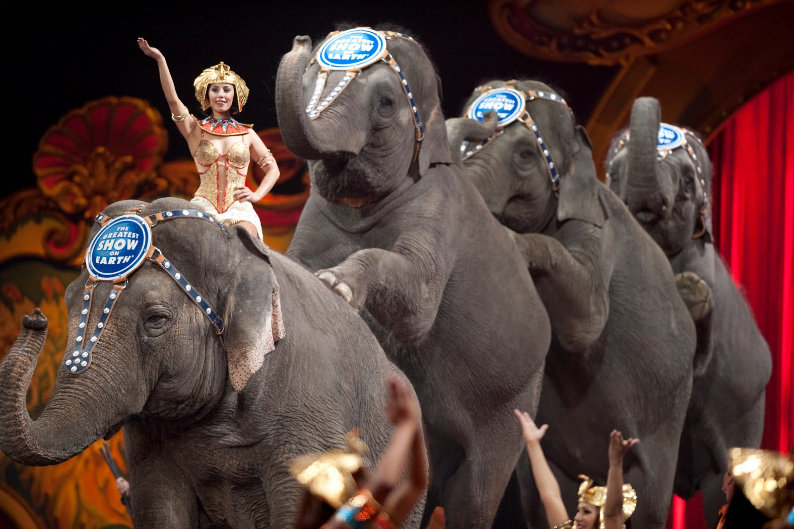 Poll: Should the Use of Wild Animals in Circuses be Banned?