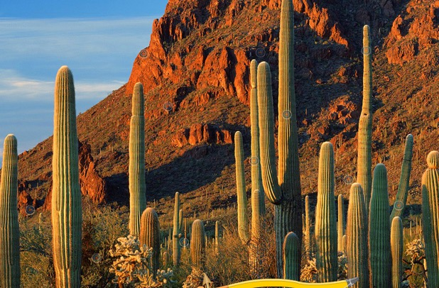 Cactus Forest Hidden Targ…