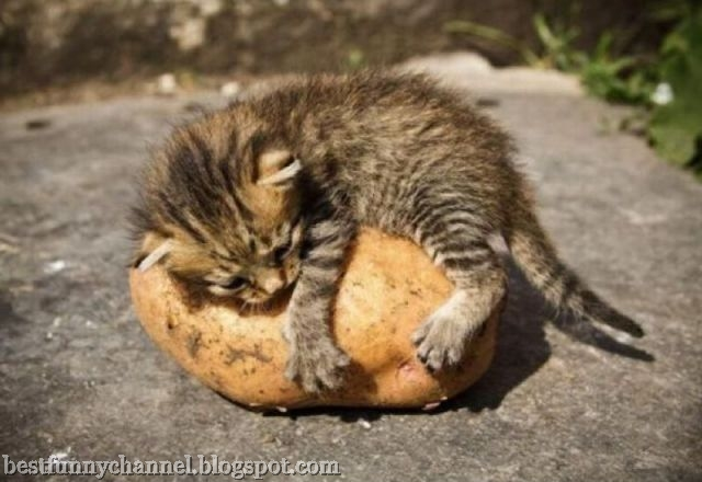Kittie and potato
