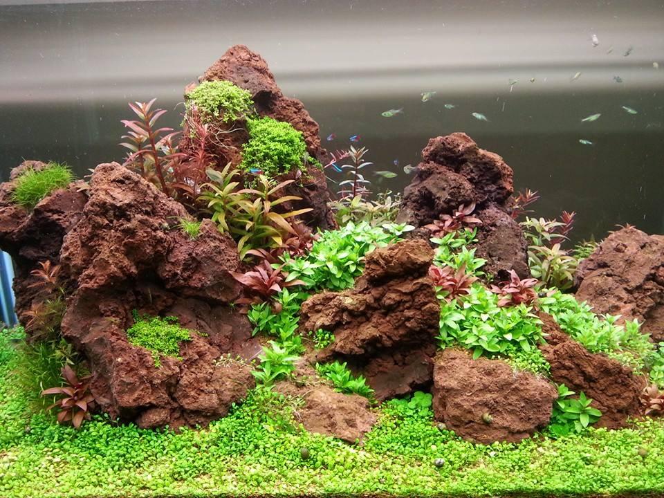 Đá nham thạch rất được ưa chuộng trong các hồ thủy sinh