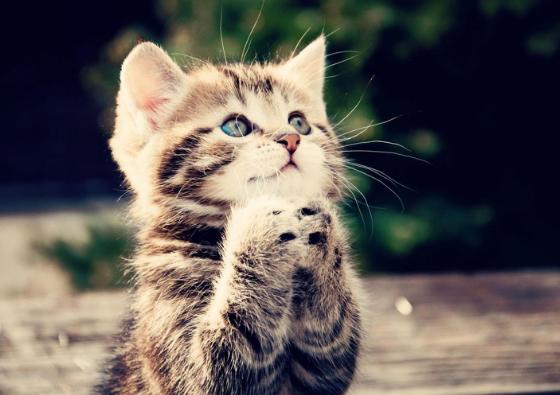 Kenapa Kucing Menjadi Hewan Kesayangan Rasullullah?