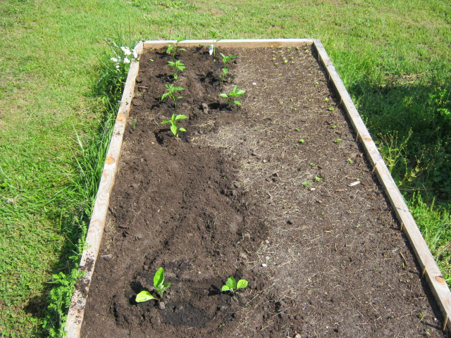 The Benefits of Raised Bed Gardening----Chad Brock Red Bird