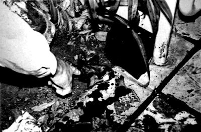 Mio ritocco di una foto che ritrae sangue e prove sulla scena del crimine del caso O. J. Simpson. Il link al sito da cui è tratta l'immagine è in fondo al post.