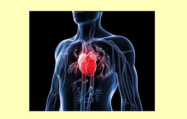 Pengertian Jantung, Struktur Jantung, Fungsi Jantung, Jalur Listrik Jantung