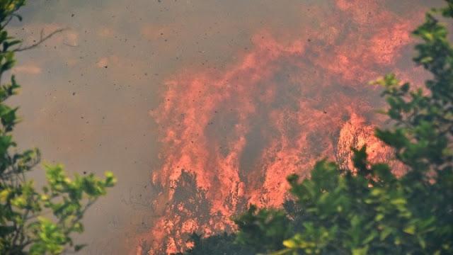 Σε υψηλό κίνδυνο πυρκαγιάς η Αργολίδα το Σάββατο 22 Αυγούστου