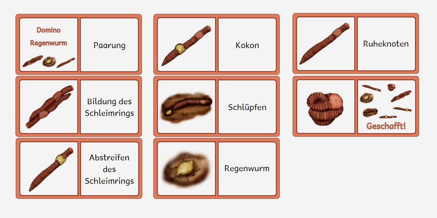 Wunderbar Segmentierte Würmer Die Regenwurm Arbeitsblatt Antworten ...