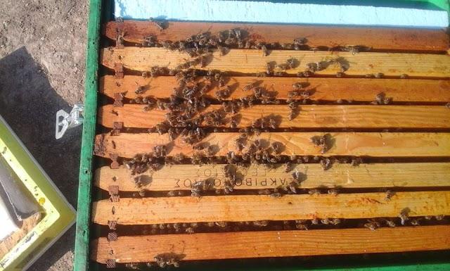 Έτσι ξεχειμωνιάζουν τα μελίσσια!!! Ο ιδανικός πληθυσμός για μια δυνατή Άνοιξη!