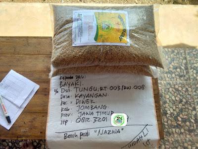 Benih Padi Pesanan    BAYAKI Jombang, Jatim.     Benih Sebelum di Packing.