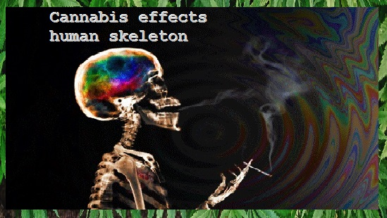 Cannabis effects human skeleton