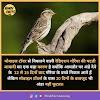 Sparrow In Hindi - गौरेया चिड़िया की जानकारी और रोचक तथ्य