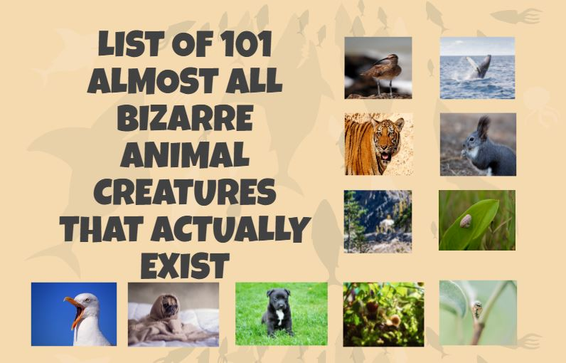 Bizarre Cool Animal Creatures