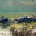 Daring filmmakers get close and personal with with crocodiles in a habitat in Mexico
