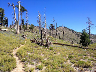 View north toward Mount Islip from Islip Ridge Trail, Crystal Lake, Angeles National Forest