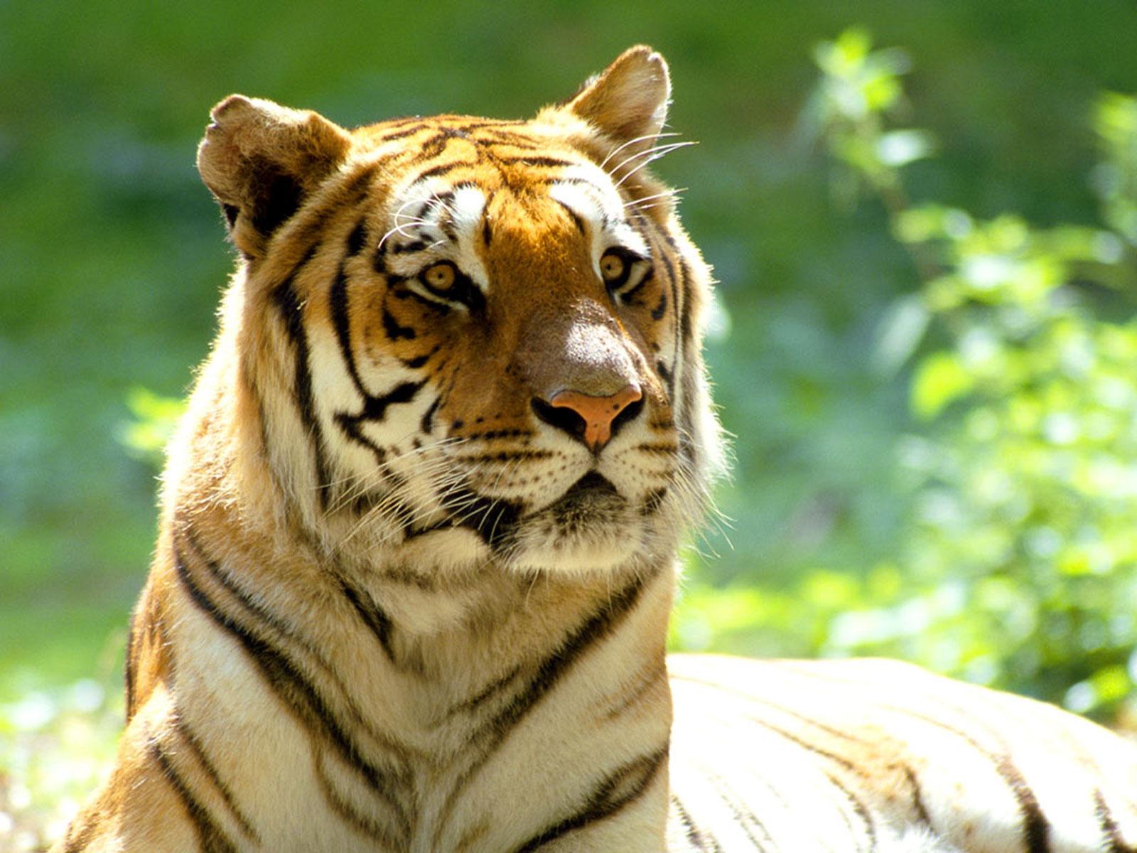 Animales: Las Mejores Fotos De Animales [nunca Antes Vistas]