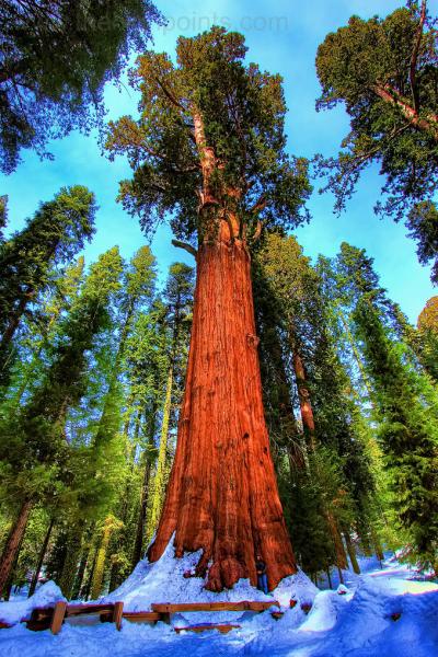 Ain defali online adol les arbres les plus beaux du monde - Les plus beaux plafonds du monde ...