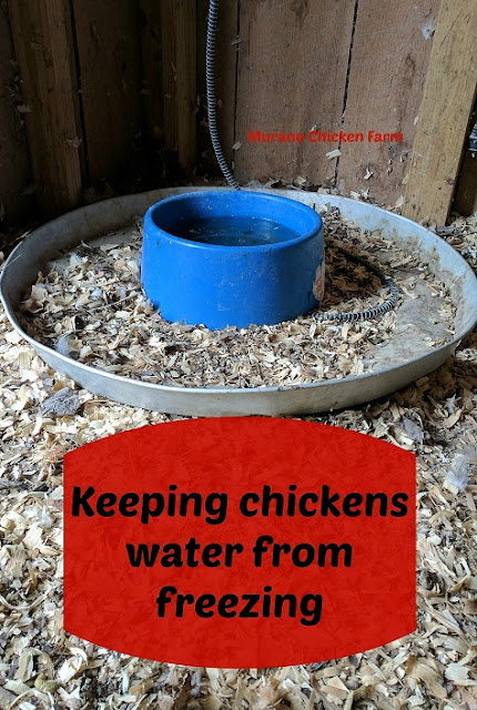 Keeping chickens water from freezing