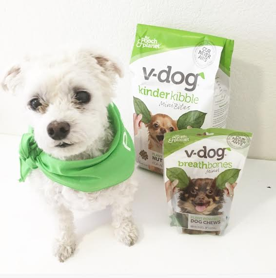 Stories Tales Go Dog Go: Ashley Ninette: Should Dogs Go Vegan? My Dog's Vegan Story