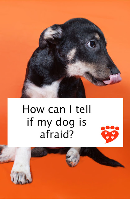 How can I tell if my dog is afraid? A guide to dog body language. Illustrated here by a fearful puppy