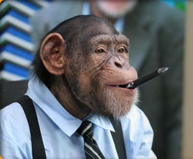 The gentle monkey