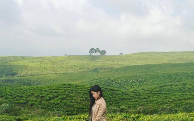 foto kebun teh di lereng gunung dempo cantik