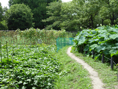 花博記念公園鶴見緑地 畑