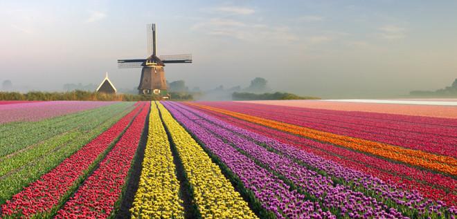 Maravilla Humana y Natural, Campos de tulipanes en Holanda 2