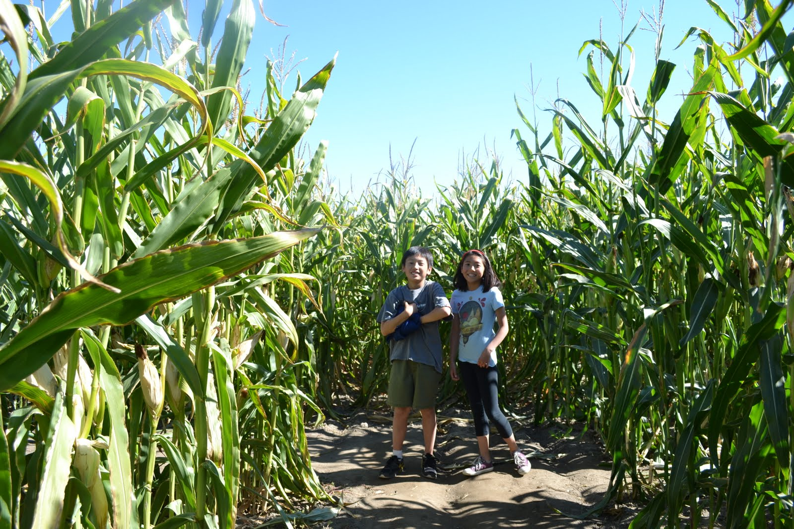 Mother Bliss Big Horse Corn Maze