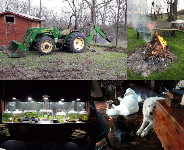 Some of my favorite things: my backhoe, my planted tanks, my campfire ring, and my family.