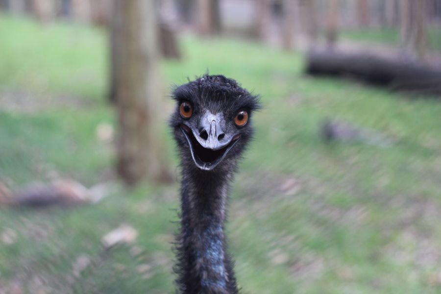 16. Happy Emu by Ruby Helyer