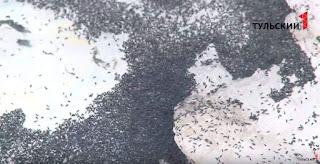 FOTOS: insectos invaden rusia en plena tormenta.