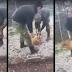 Καταδικάστηκαν οι νεαροί που είχαν κακοποιήσει σκύλο όταν ήταν φαντάροι