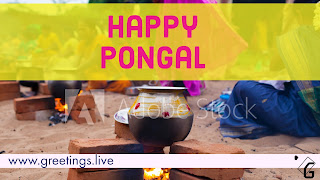 Happy Pongal Festival HD Images collections
