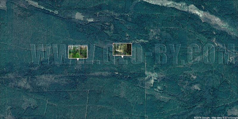 Спутниковая карта непроездных мест за хутором Дупляны в Налибокской пуще