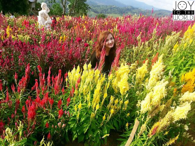 Sirao Flower Farm Cebu