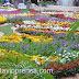 La Feria de las Flores: hecha para vos