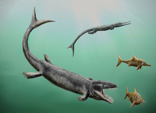Dakosaurus andiniensis
