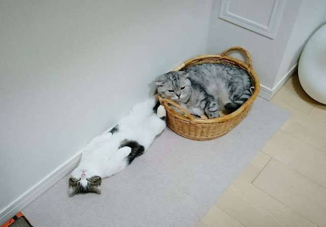 Gaya Tidur Kucing Yang Sangat Comel