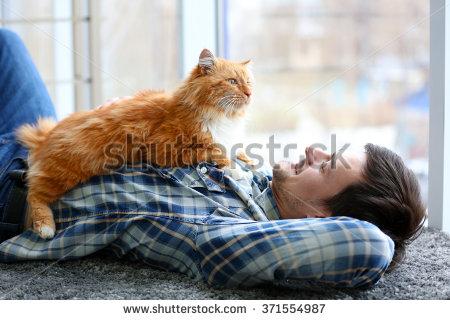 Apakah Kucing Juga Merasakan Rasa Sayang Kepada Pemiliknya