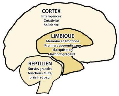 عندما يسيطر الدماغ على  وظائف الجسم الحيوية