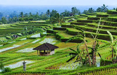 Top 10 Tourist Attractions in Indonesia Jatiluwih Rice Fields