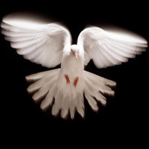 A flying white Dove of love