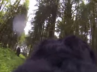 Pakai Kamera Punggung, Anjing Ini Tangkap Penampakan