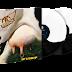 Aerosmith presenta versión de colección del vinyl de Get a Grip