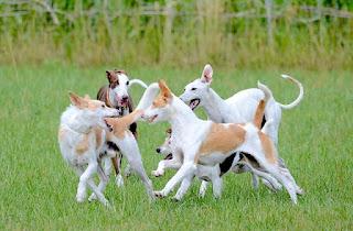 exercícios cães jovens