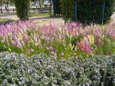 山田池公園の花壇