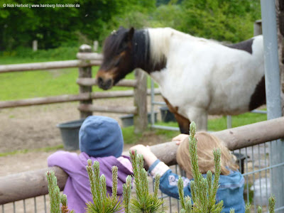 Ponyhof, Ausflug, Kinder, Pony, Gehege