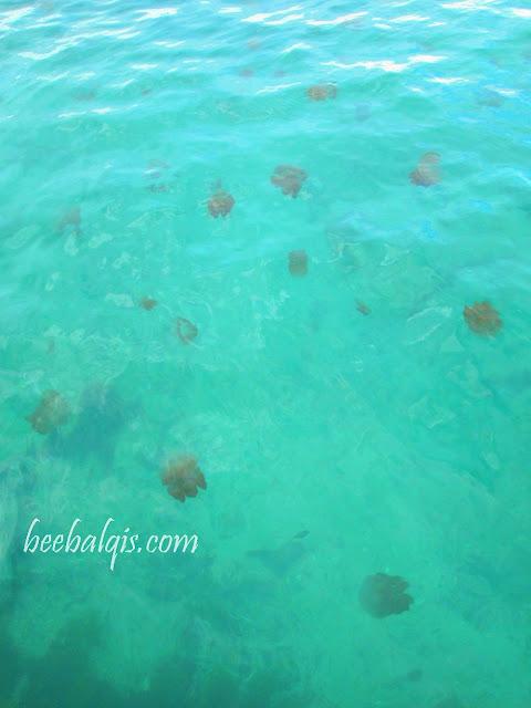 Danau Ubur-ubur tak menyengat di Pulau Kakaban, Derawan, Indonesia