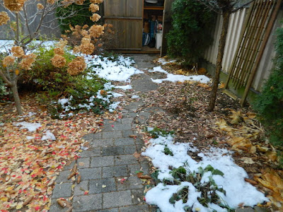 Toronto St. Clair West Village Fall Backyard Cleanup Before by Paul Jung Gardening Services--a Toronto Organic Gardening Company