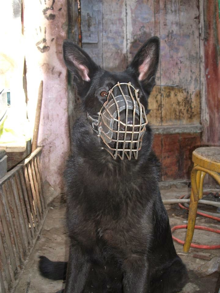 صور كلاب متوحشه